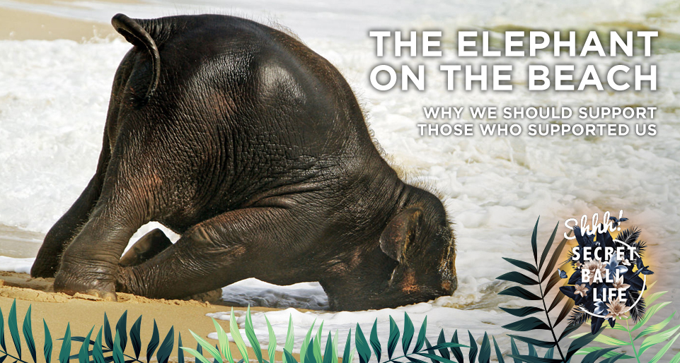 THE ELEPHANT ON THE BEACH thumbnail image